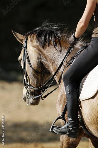 Valokuvatapetti equitation