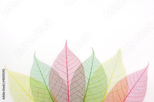Garden Poster Decorative skeleton leaves colored skeleton leafs abstract background