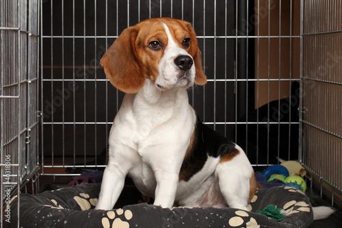 Fotografie, Obraz  Dog in cage