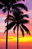 palmy na tle pięknego zachodu słońca - 40318739