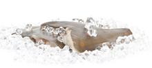 Fresh Flounder On Ice Closeup