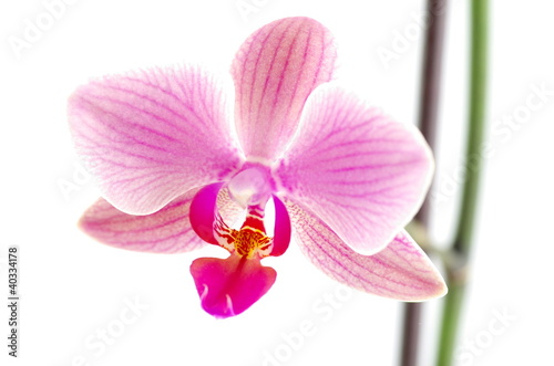 orchidea-na-bialym-tle