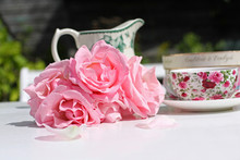 Pink Roses And An Elegant Teacup In The Garden