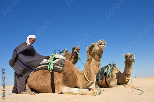 Valokuva  Chamelier dans le désert #2