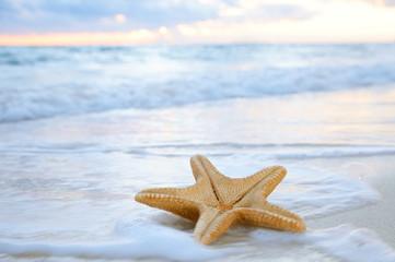 rozgwiazda gwiazdy morskiej na plaży, czas błękitnego morza i wschodu słońca, płytkie d