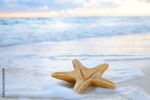 Foto-Schiebegardine Komplettsystem - sea star starfish on beach, blue sea and sunrise time, shallow d (von Elena Moiseeva)