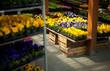 kwiaciarnia sklep ogrodniczy ogród ogrodnik sadzonki