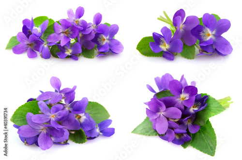 Wood violets flowers Poster