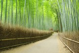 Alejka w bambusowym lesie - Sagano