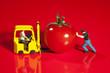 Miniatur Arbeiter schiebt eine Tomate auf einen Gabelstapler