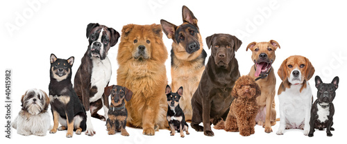 Foto op Plexiglas Hond Group of twelve dogs