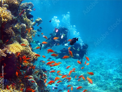 Canvas Prints Coral reefs two divers among fish