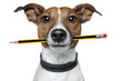canvas print picture - dog with pencil and eraser