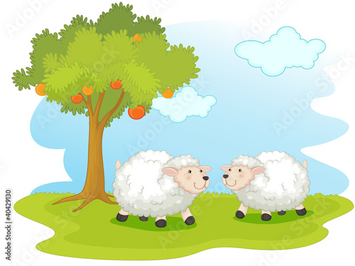 Wall Murals Cats Sheep