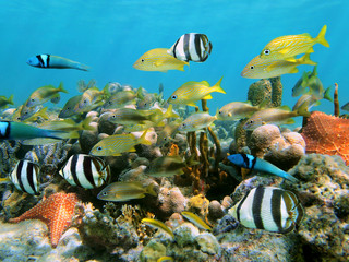School of colorful tropical fish in a coral reef underwater sea, Caribbean, Dominican Republic
