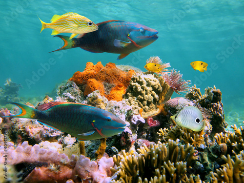 Poster Coral reefs Colorful tropical fish and marine life in a coral reef, Caribbean sea