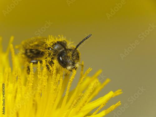 Aluminium Prints Bee Bee at work
