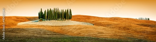 Tuscany landscape - cypress grove