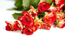 Roses In A Bunch Isolated On A...