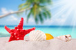 shells and starfish on sand beach