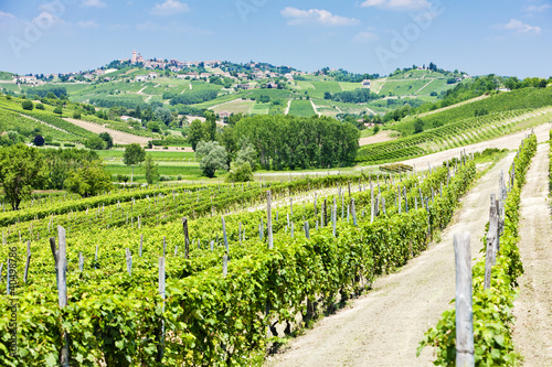 vineyars in Asti Region, Piedmont, Italy Canvas Print