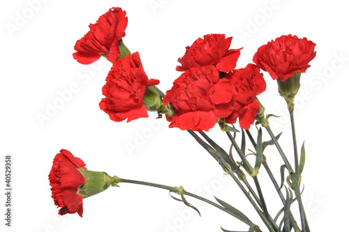 Photo  Bouquet of carnations
