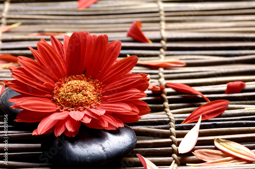 Spoed Foto op Canvas Spa Flower with petals in the spa