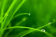 Water Drops On Grass With Sparkle / Copy Space