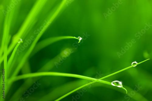 krople-wody-na-trawie-z-blasku-kopia-przestrzen