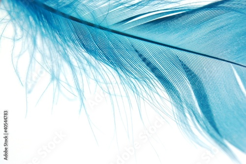 niebieskie-pioro