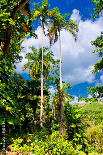 Photo Tropical forest in Cuba