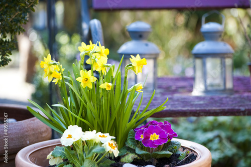 Cadres-photo bureau Narcisse Spring flowers