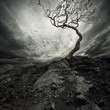 canvas print picture - Dramatic sky over old lonely tree.