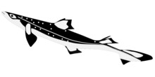 Vector Shark Katran