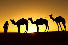 Camel Train Silhouette In The Desert