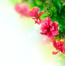 Hibiscus Flower Border Design Over White