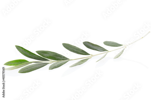 Fotografia Olive twig on white, clipping path included