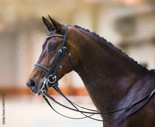 Obraz na plátne horse head isolated