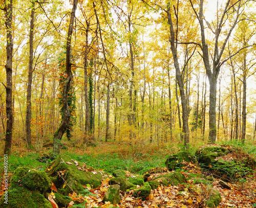 Dekoracja na wymiar nieskazone-zarosla-do-lasu-jesienia