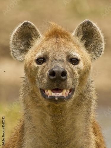 In de dag Hyena Iena