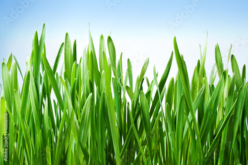 piekna-wiosna-trawy