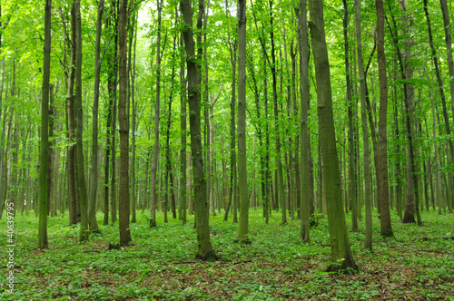 Photo Stands Road in forest Trees