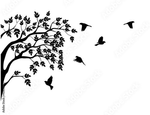sylwetka-drzewa-i-ptak