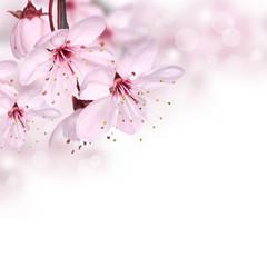 Fototapeta Do restauracji Pink spring blossom design border background