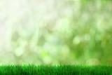 Fresh grass - 40666370