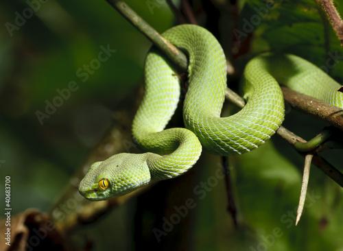 Fotografía  Green snake in rain forest