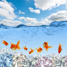 Swimming Gold Fish And Money S...