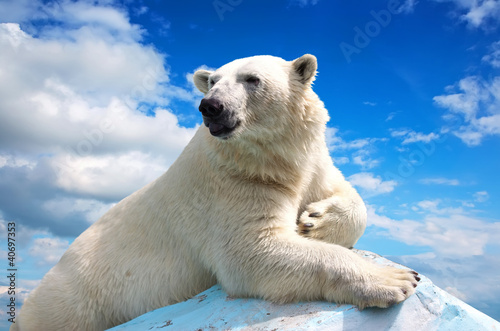 polar bear against sky Wallpaper Mural