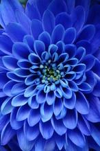 Close Up Of Blue Flower : Aste...