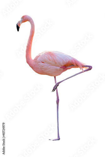 Photo sur Aluminium Flamingo Flamant rose